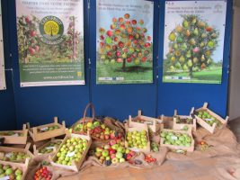 hortifolies-certifruits